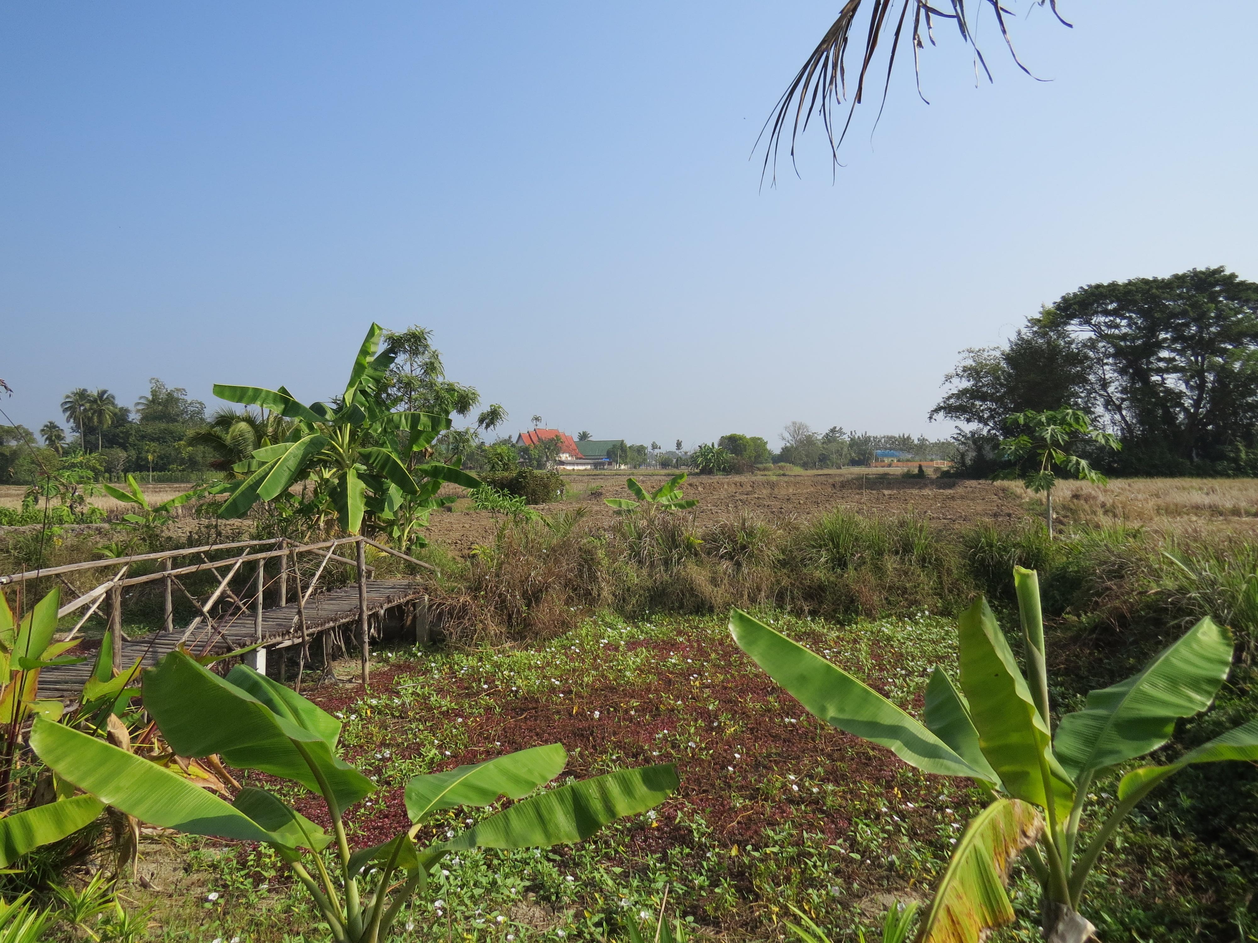 Trafiłam do rodziny uczącej gotować, która uprawiała swoją Eko-farmę pod Chiang Mai.
