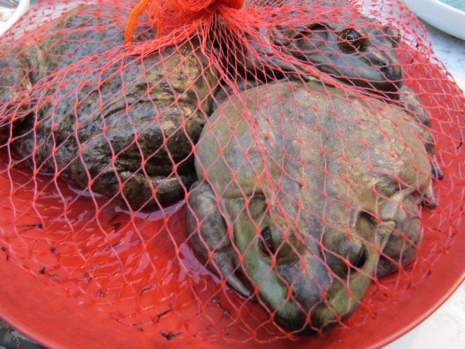 Na chińskim straganie w dzień targowy proszę o to żaba albo ropucha. Rzeczywiście smakuje jak kurczak.