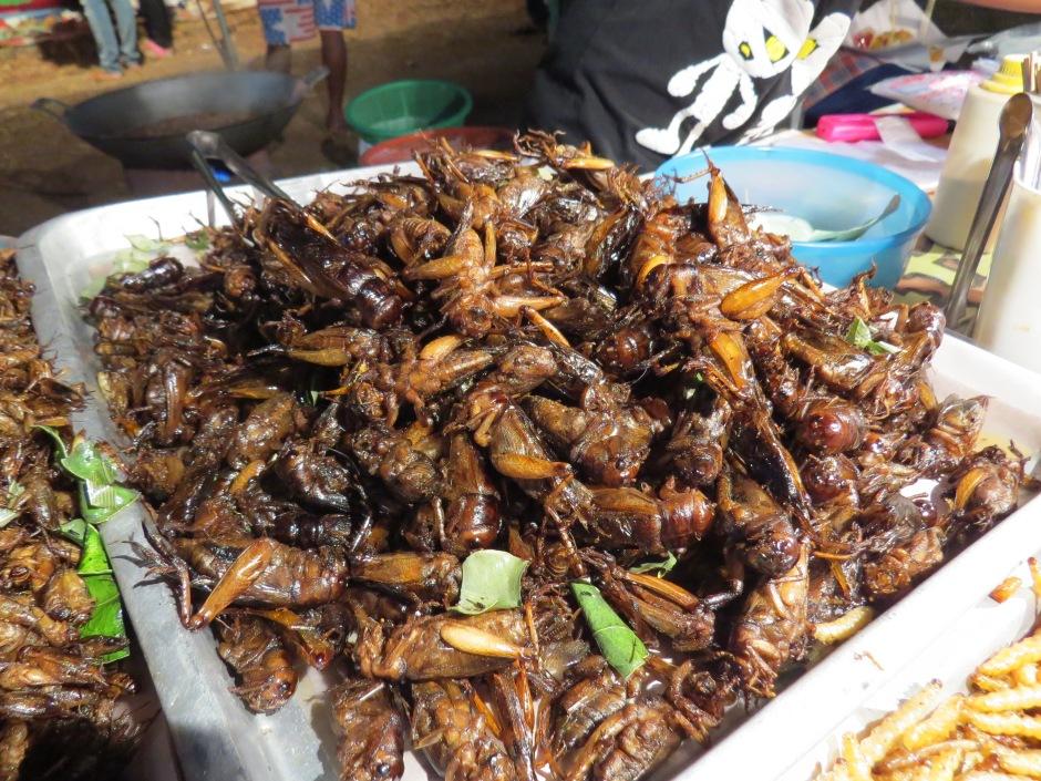 Kolejne, tym razem tajskie, robaki.