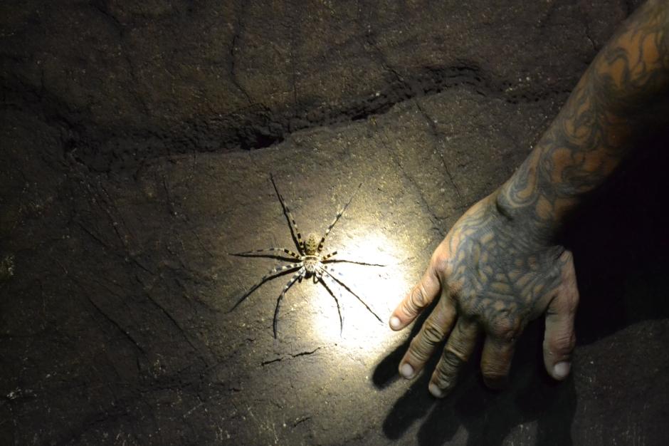 pająki w Tajlandii, jaskinie w Tajlandii, Khao Sok, Khao Sok National Park